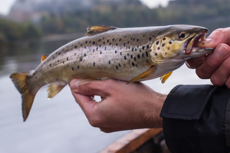 Trout Fishing in Perthshire